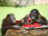 National Watermelon Day Celebrated By All Creatures Great & Small