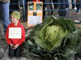 10-year-old Wins Giant Cabbage Contest