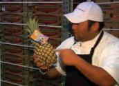 Why Choose Maui Gold Pineapple