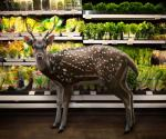 Wild Creatures Go 'shopping' In Supermarkets