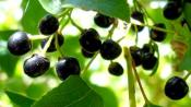 11 Berries To Improve Your Health