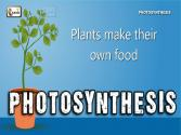 Photosynthesis | Photosynthesis In Plants | Photosynthesis - Biology Basics