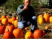 How To Pick The Best Pumpkin