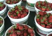 About The Best Strawberries
