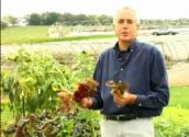 How To Grow Garden Vegetable