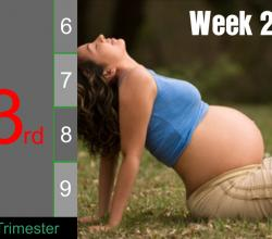 Pregnancy - Third Trimester: Week 29