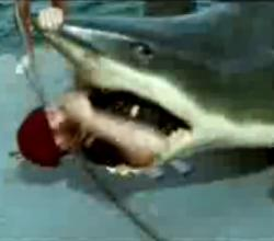 A Man Inside the Shark
