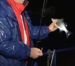 Tips On Hybrid Fishing Under Lights
