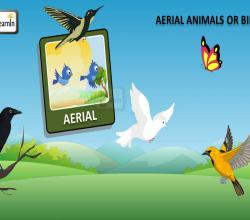 Birds Video for Kids | Aerial Animals | Kindergarten