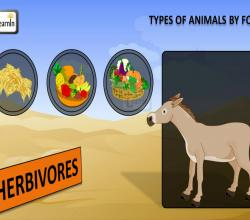 Types of Animals by Food | Herbivores Carnivores Omnivores