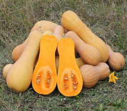 Seasons - Butternut Squash