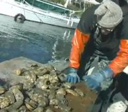 Mike Osinski Oyster Farming Ideas