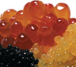 dineLA Sweepstakes - The Ultimate Caviar Experience