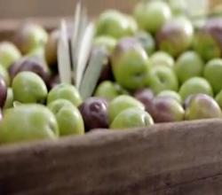 Choosing Olive Oil | Olive Oil Varieties & Information