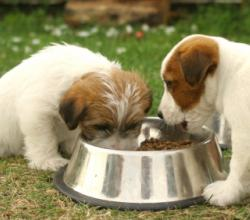 How To Make Healthy Food For Your Dog