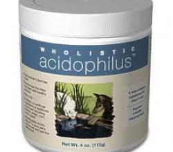 Acidophilus Review - The Beneficial Probiotic