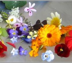 The Wonder of Edible Flowers!