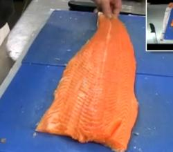 Fillet Fresh Salmon  Part 2