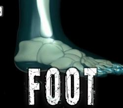 Foot Bones Explained | Foot Joints and Ankle Movements | Human Anatomy in 3D