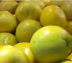 Getting to Know Pomelo Fruit