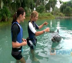 Swimming with Dolphins at Sea World, Gold Coast