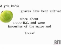 Uses for Guava