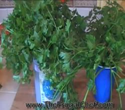 How To Store Green Leafy Herbs