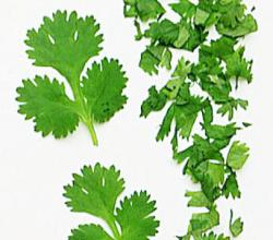 What Is Coriander?