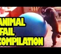 Funny Animals Videos : Animal Fail Compilation 2012