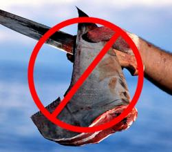 California Bans Shark Fins Too