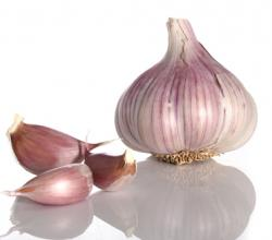 What Is The History Of Garlic Use