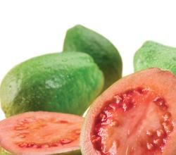 Guava Concentrate Health Benefits