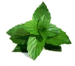 Some Medicinal Uses Of Mint