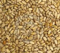What Are The Alternatives To Pine Nuts