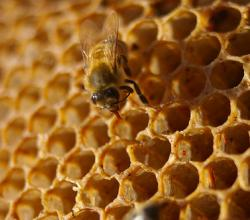 How to Keep Raw Honey Safe and Pure