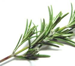 Cook These 10 Great Recipes With Rosemary