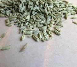 What Are The Health Benefits Of Fennel