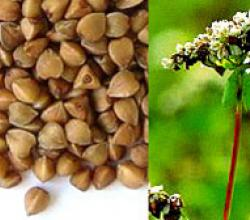Buckwheat Health Benefits