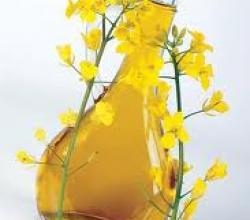 What Vitamins Does Canola Oil Contain