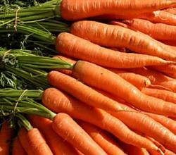 Top 10 Winter Vegetables That Help You Stay Fit