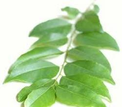 Curry Leaves Medicinal Uses
