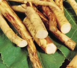 Horseradish Substitutes: Top Horseradish Substitutes