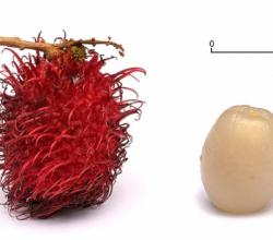 How To Eat Rambutan?