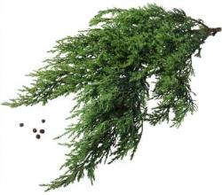 What Are The Benefits Of Juniper Oil?