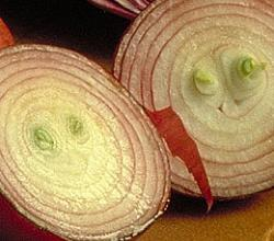 Onion Garnish-How To Tips & Ideas