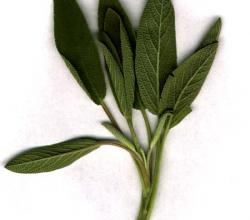 Sage Leaf Benefits