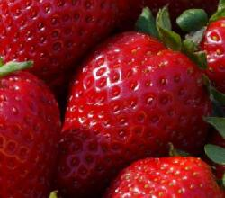 Strawberry Gene Code Cracked Finally