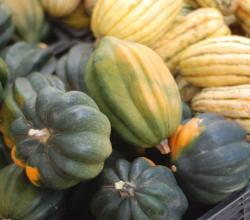 Winter Food Ideas: Quick And Easy Ways Of Cooking Winter Squash