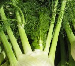 How to Cook With Fennel Leaves