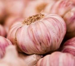 Garlic Necessary For A Healthy Heart